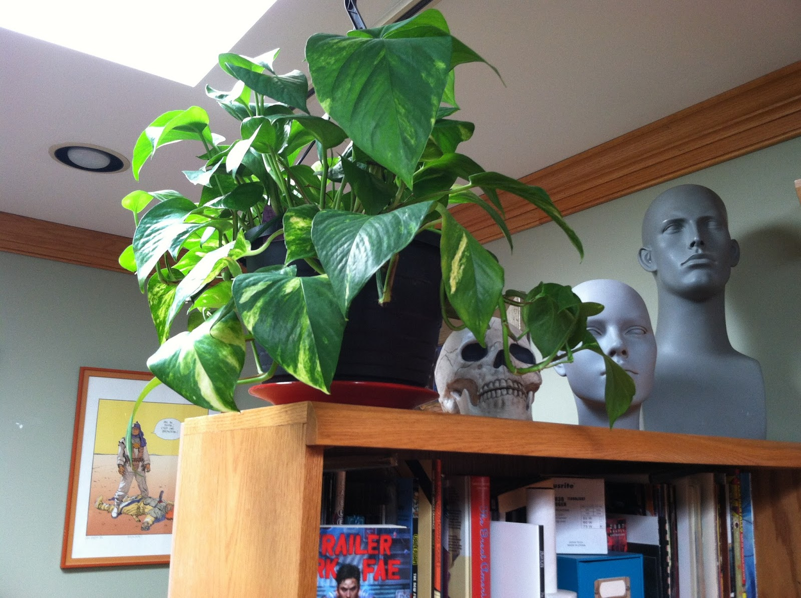 Studio Equipment : Plants