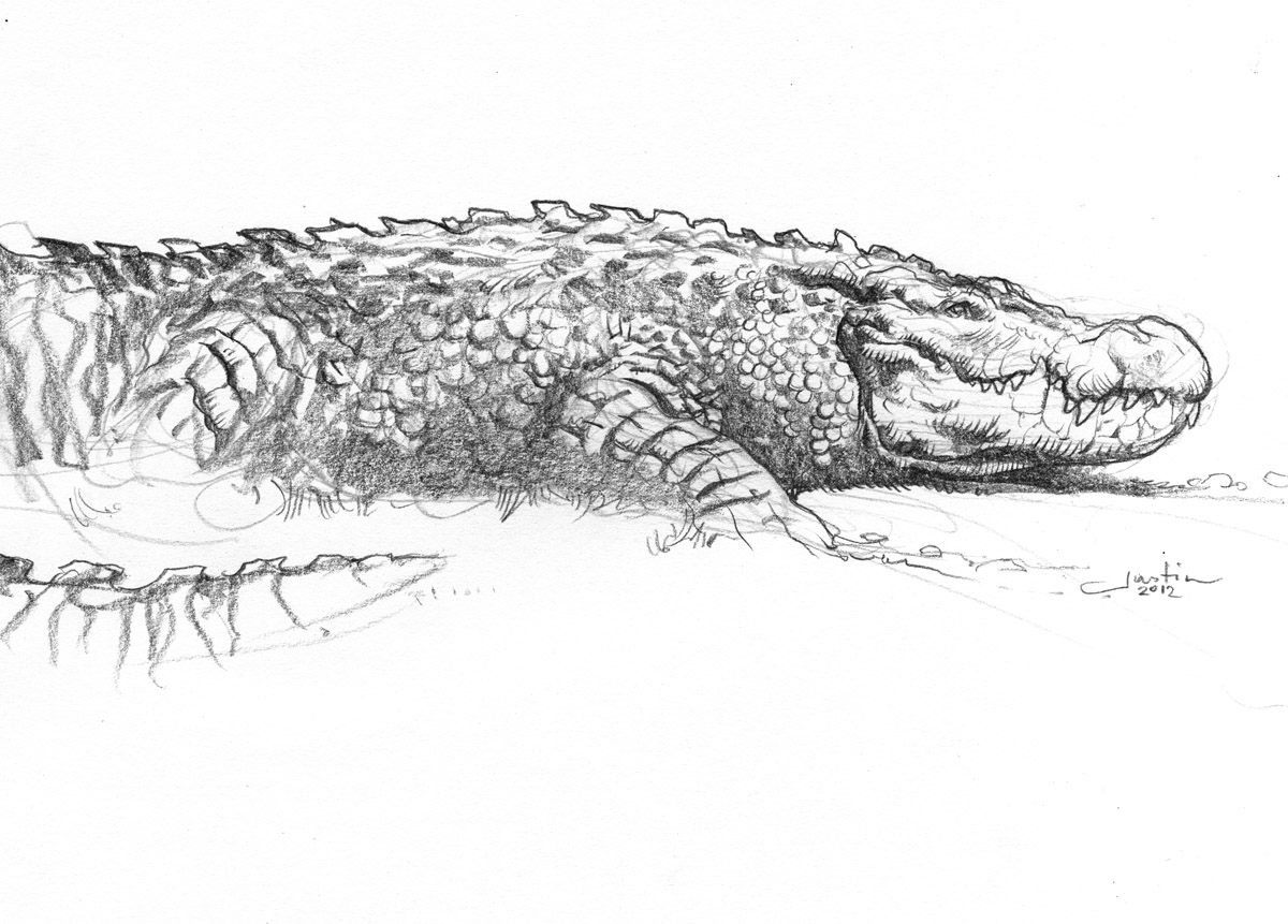 Let's Draw Real-Life Dragons