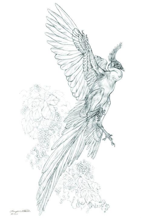 Ancient Wings in the Vineyard