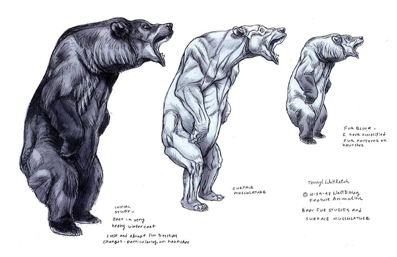 Polar bear anatomy - animalcarecollege.info