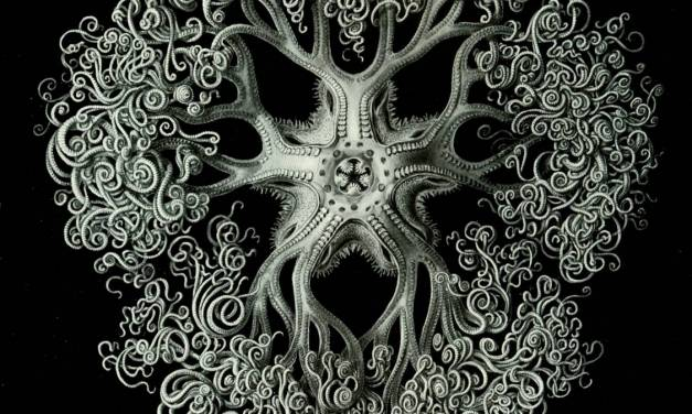 Artist of the Month : Ernst Haeckel