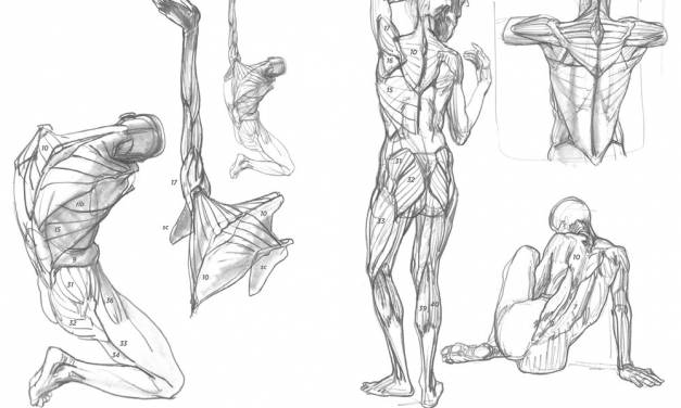 Learning to Draw Anatomy from Imagination